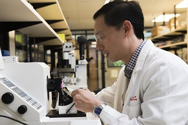 Dr. Hsieh works in his lab.