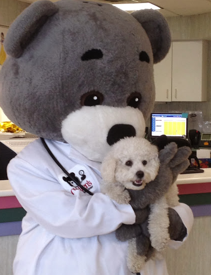 Therapeutic pup Murphy meets Dr. Bear
