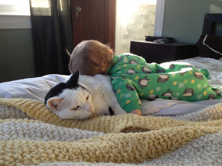 camp cat with baby